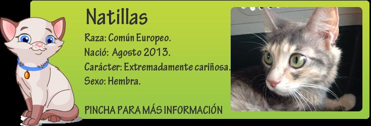http://mirada-animal-toledo.blogspot.com.es/2014/09/natillas-adopcion-o-acogida-urgente.html
