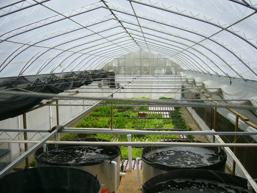 Canadian aquaponics canada 39 s source for aquaponic for Aquaponic source