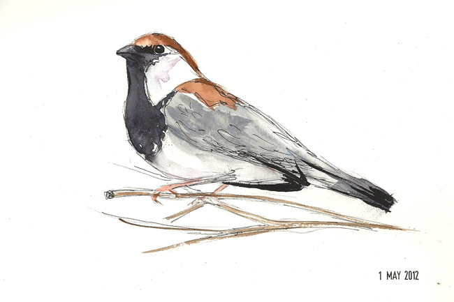 Simple sparrow drawings - photo#27