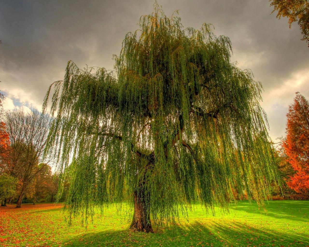 Деревья-доноры и биовампиры