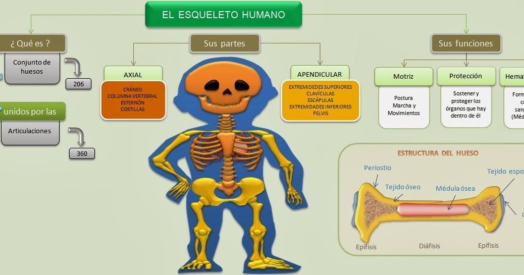 EL ESQUELETO HUMANO | Esquemas, diagramas, gráficos y mapas ...