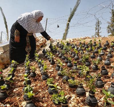 فقط في فلسطين.. عندما تتحول القنابل المسيلة للدموع الى زهور جميلة