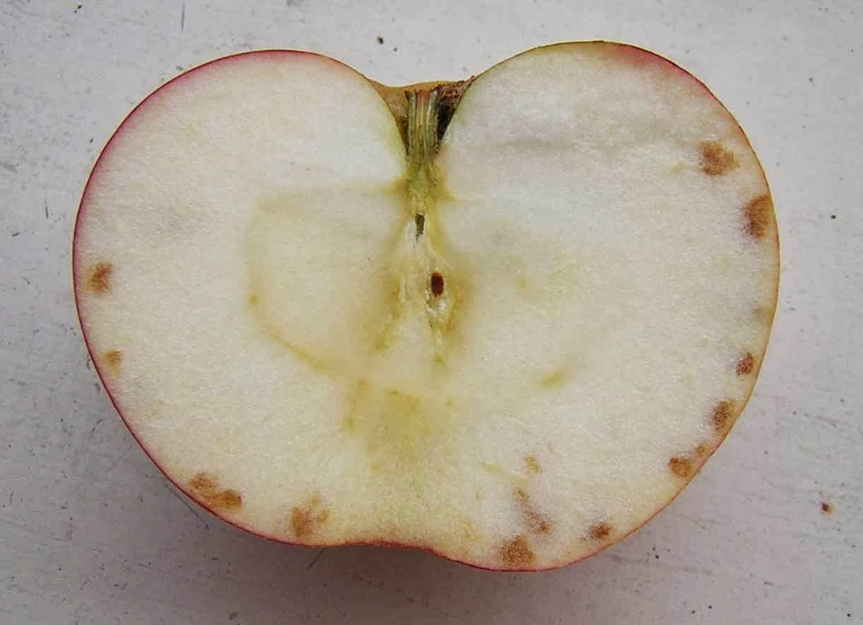 The Fruit Growing Expert Apples Pests And Diseases Identifyer