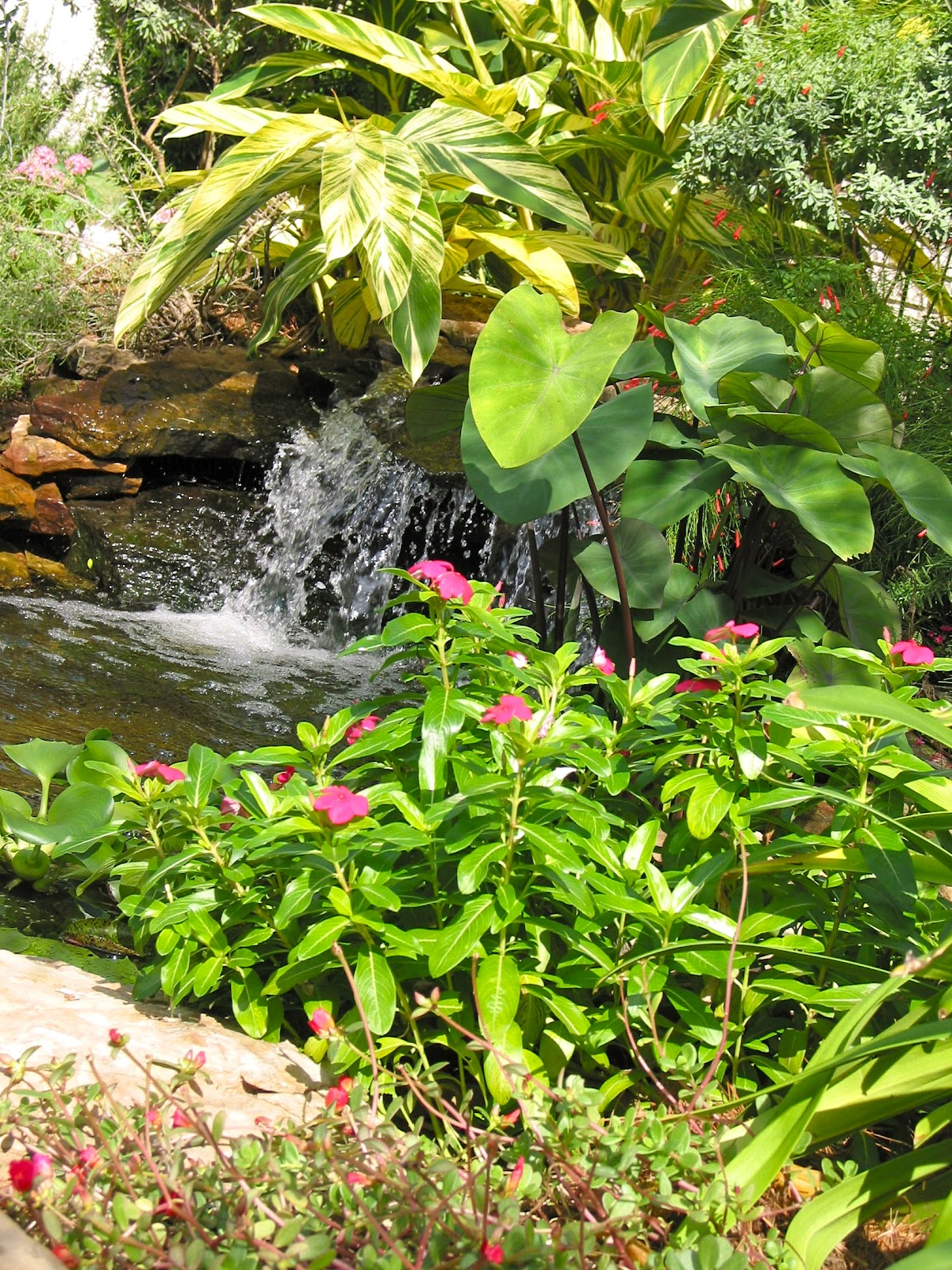 From The Pondlady 39 S Pad 10 Essential Pond Building Tips