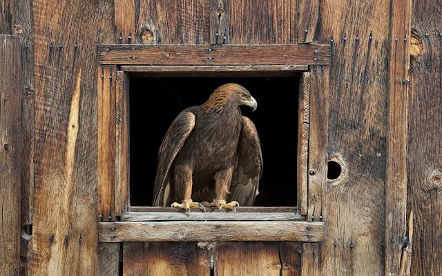 "<img src=""http://2.bp.blogspot.com/-PVIWPnk-FH8/Ud2tbcQCB7I/AAAAAAAAAV0/KdBcNJivyuE/s1600/barn_eagle-wide.jpg"" alt=""Birds wallpapers"" />"