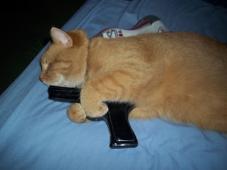 cat with gun, fat orange cat, sleeping cat