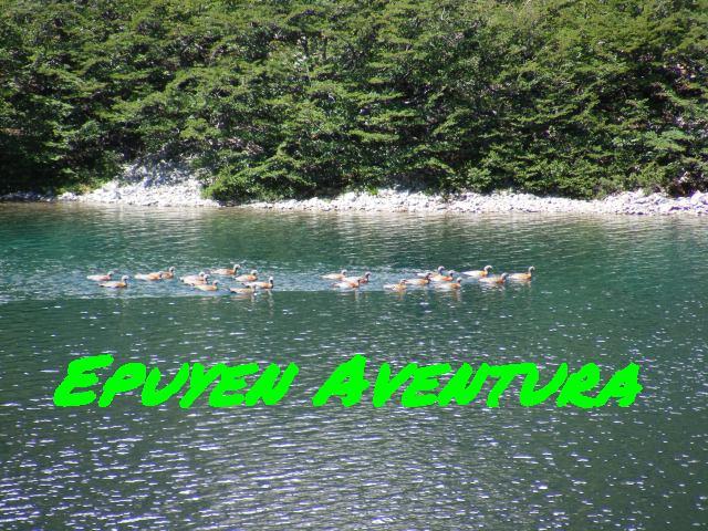 Observación de aves - Patagonia Andina