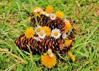 flora fantanele