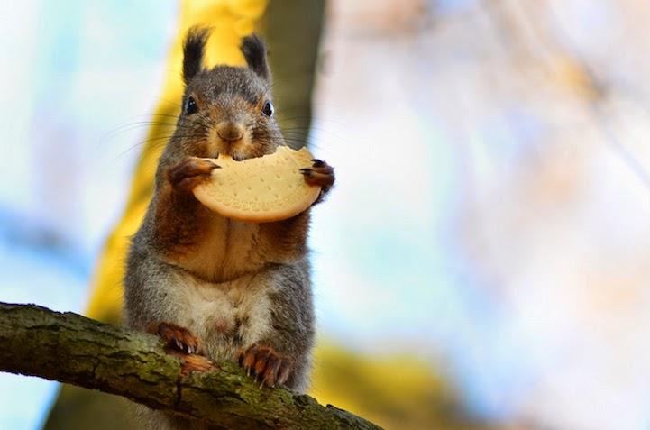 wildlife photography feeding animals konsta  punkka-1