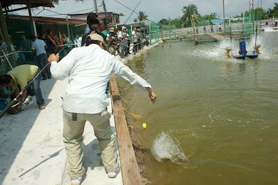 JoranPancing Kerapu Naga Menanti Pengunjung Kolam LS