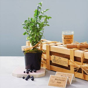 Ma Bicyclette: Buy Handmade | Christmas Gift Guide For Her - Grow Your Own Blueberry Jam Kit