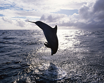 Dolphin_Wallpaper_09