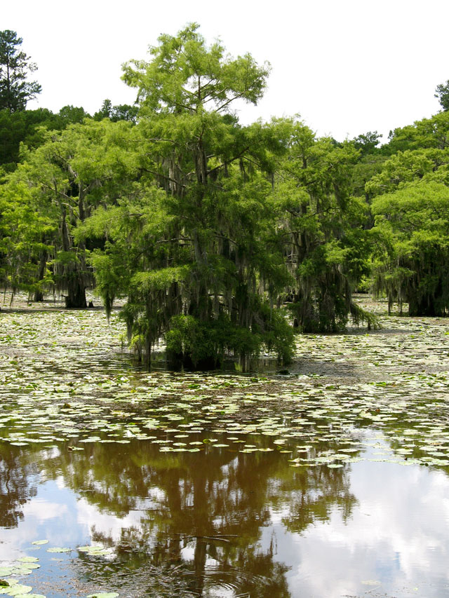 Озеро Каддо,США,Техас,Луизиана