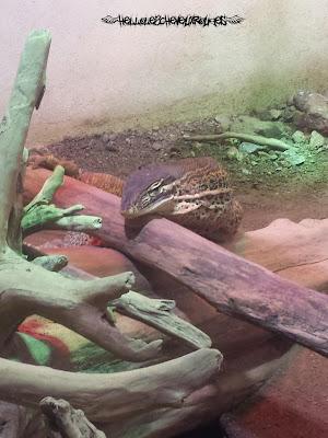 Reptile dans son enclos à Touroparc