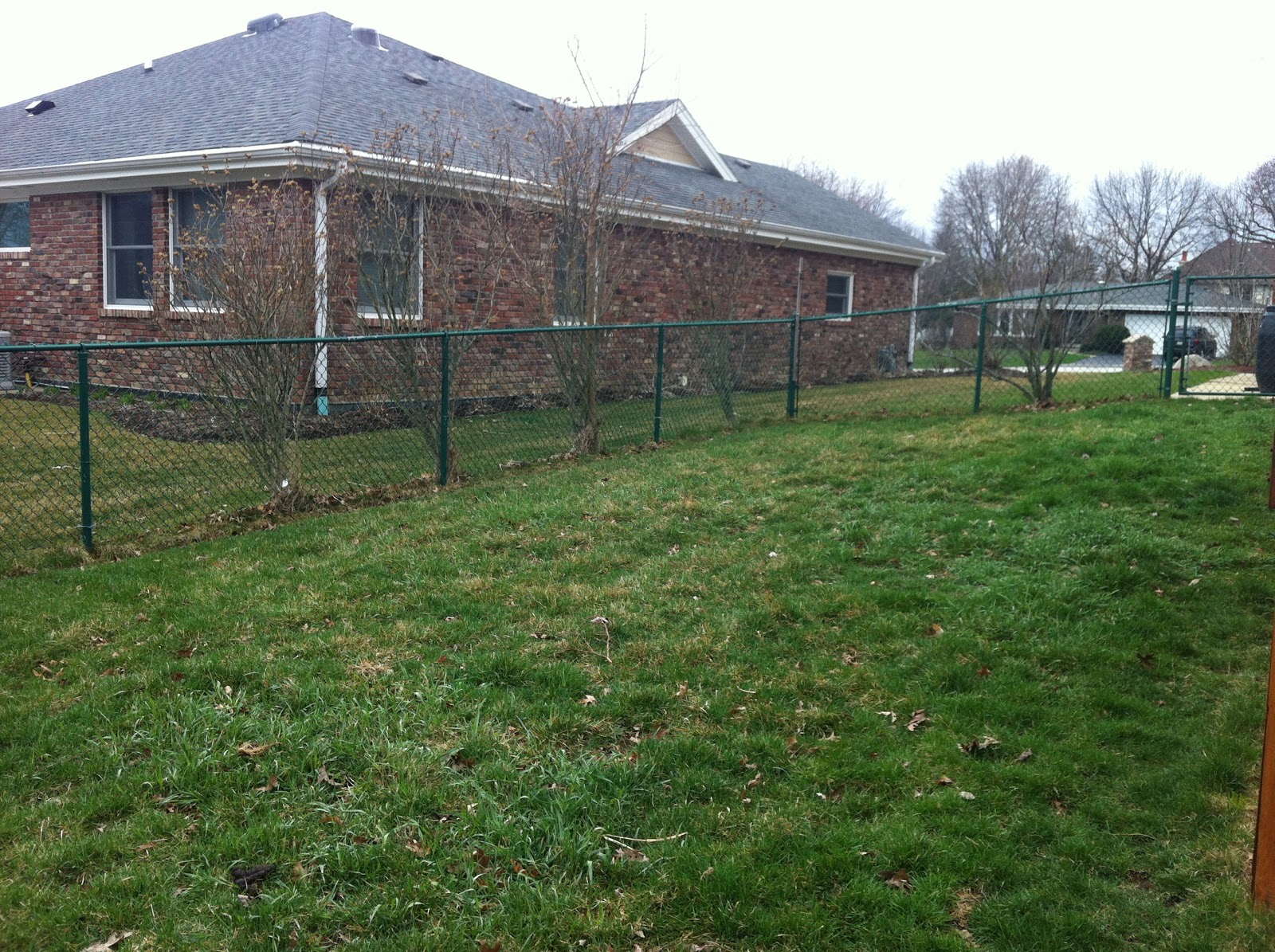 Empty Space In Backyard : On the other side of the yard, more blank space