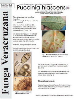 Puccinia hiascens (III)
