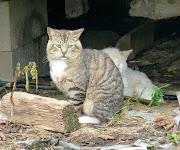 http://www.hitachi-cat.com cat