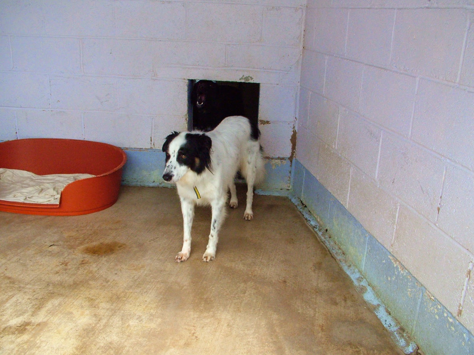 dog in rescue centre