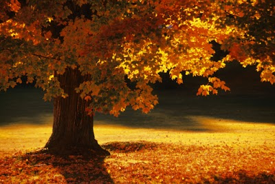 Autumn colors beginning to show in Ohio; many weekend events