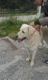 Βρέθηκε αρσενικό σκυλάκι με κόκκινο λουράκι στον δρόμο Θεσσαλονίκης Περαία, στο ύψος του νυχτερινού κέντρου Μούσες.