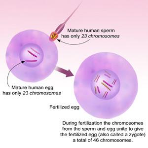 Michelle's Biology (:: September 2011