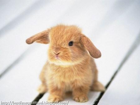 Sweet small bunny