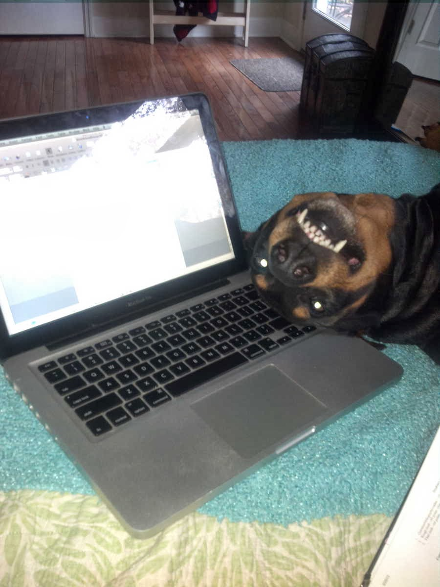 Cute dogs - part 4 (50 pics), dog pictures, dog sleeps beside laptop