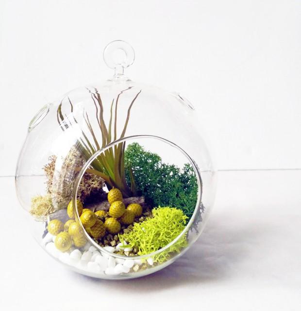 No solo diy 20 ideas de terrarios diy - Plantas para terrarios ...