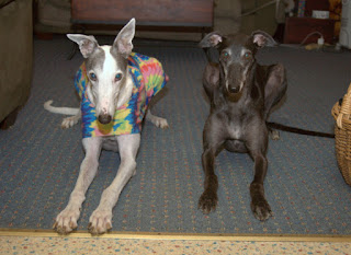 Blue and Bettina Greyhound after the earthquake