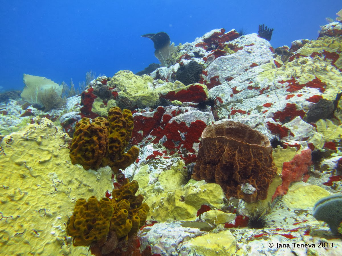 Colours& sponges underwater, les Saintes