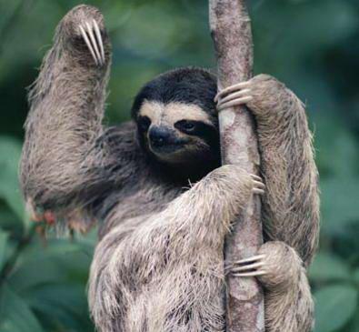 sloth-ig-2