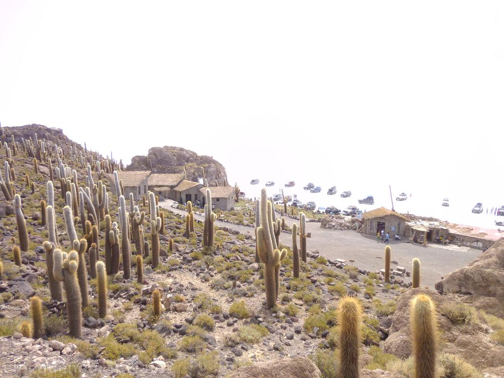 Isla del pescado, cactus, salar, Uyuni