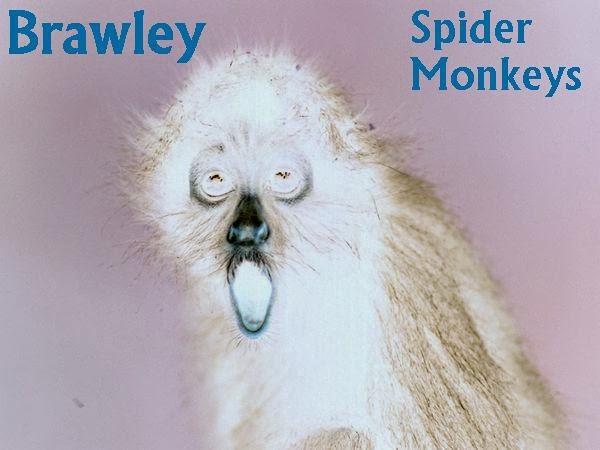 http://d75822.medialib.glogster.com/media/48/48940bdd2efe9e9866302a0c074b909ce89101ba9b70928ab216f152fafcbf08/baby-spider-jpg.jpg