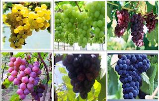 http://www.obatmelancarkanbab.com/2015/08/manfaat-buah-anggur-bagi-kesehatan.html