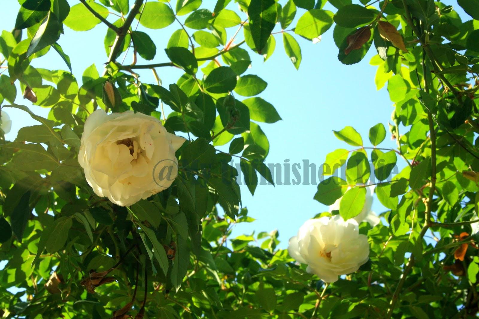 Flowers In Bhimtal Uttarakhand India Pretty Memories Of A Long