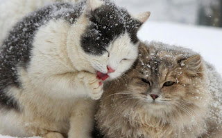 Invierno lindos gatos