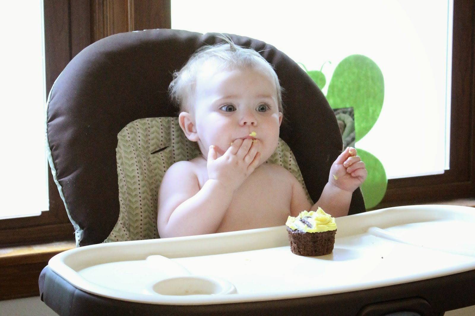 Baby pig eating cake - photo#9