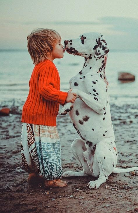 See more Love dalmations http://cutepuppyanddog.blogspot.com/