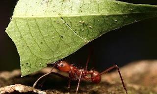 Makhluk Hidup, Semut memerlukan makanan
