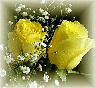 Banco de imagenes y fotos gratis fotos de rosas amarillas for What color rose is friendship