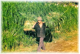 Dr Warta Daftar Skripsi Ekonomi Pembangunan Iesp Sektor Pertanian