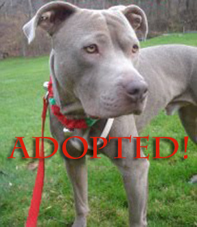 2011 - ONE YEAR AFTER HIS ADOPTION! In his new home - health and