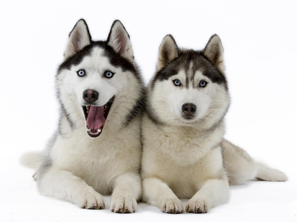 hvor mange hunder er det i norge