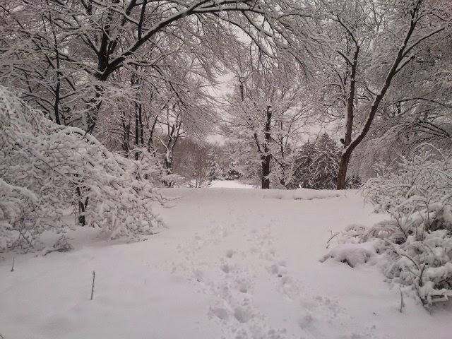 Central Park Winter