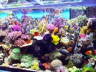 Akuarium Ikan Hias Tips Mudah Memelihara Ikan Hias Laut