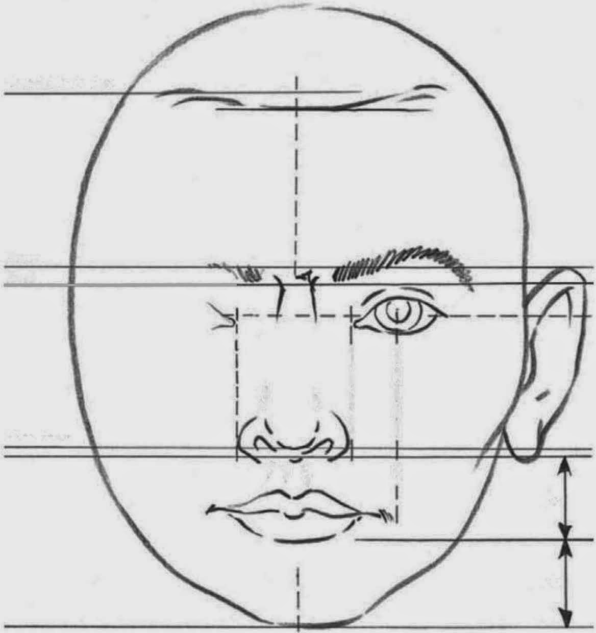 how to draw head proportions