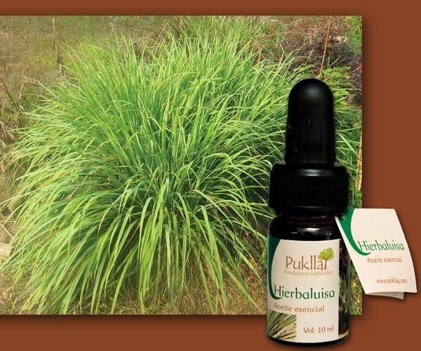 Remedios naturales de la abuela hierba luisa for Salsa de hierba luisa
