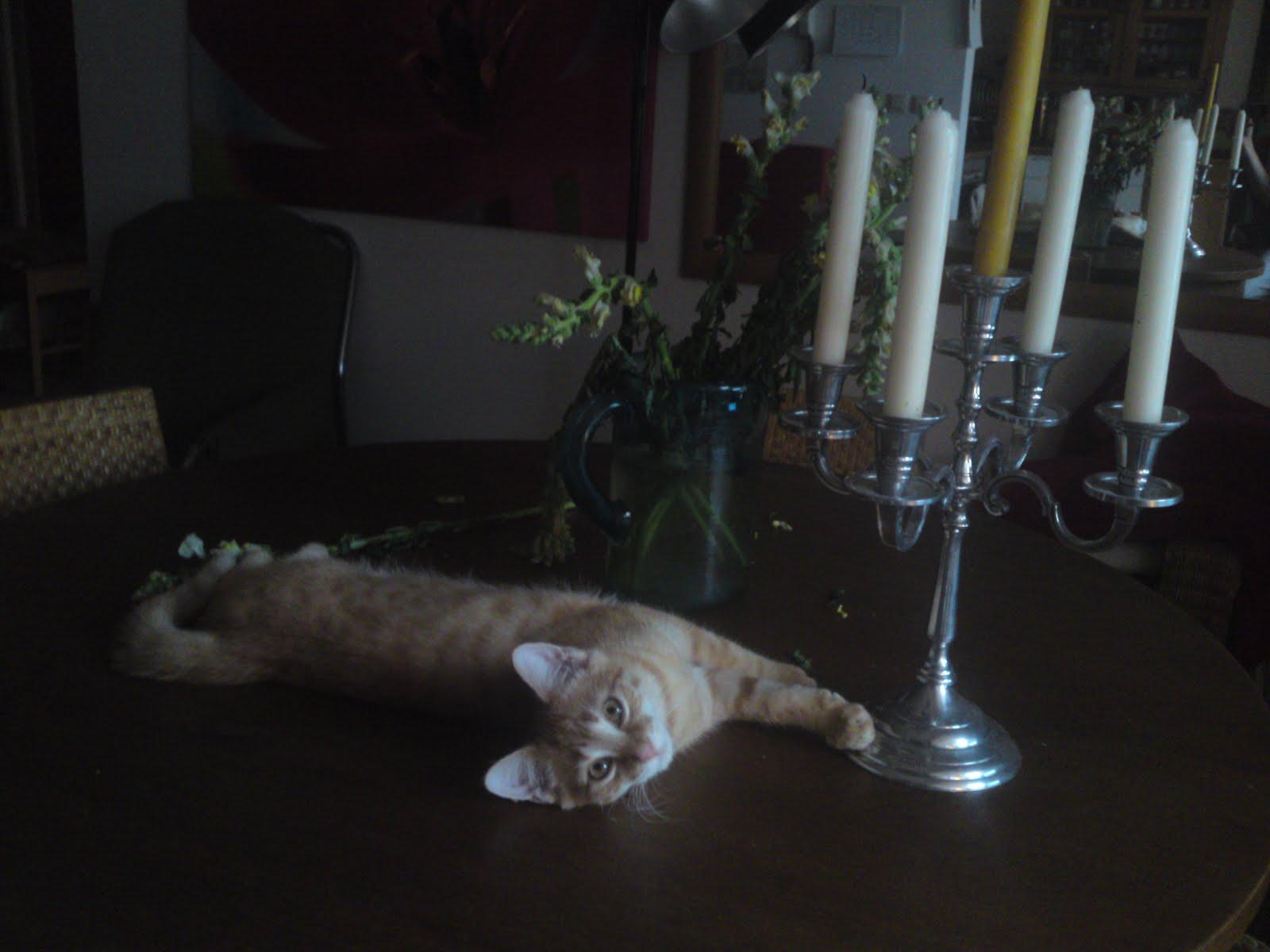 Katzenwege