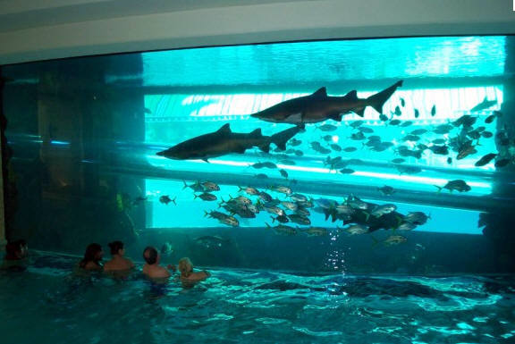 Camp host jobs swimming with sharks in las vegas for Shark fish tank