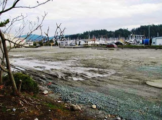 Photo of cleanup site at the former Custom Plywood site in Anacortes
